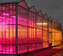 Glasshouse LEDs save greenhouse gasses