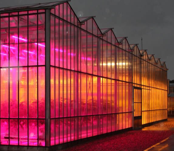 Glasshouse LEDs save greenhouse gasses